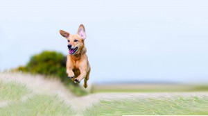Jumping dog1_horizontal_blog