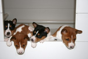 Crufts 2016 – Discover Dogs – #dorwestdog