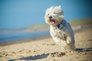Hot under the collar? Your dog's skin disorder