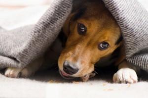 Dog_Blanket_Relax
