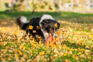 Dog_Frisbee_park