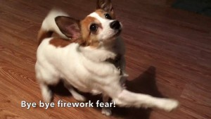 Fun game to play with your dog if they are scared of fireworks