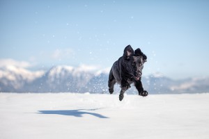 10 ways to keep your pet in perfect health this winter