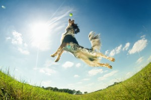 Why give Glucosamine and Chondroitin to my dog?