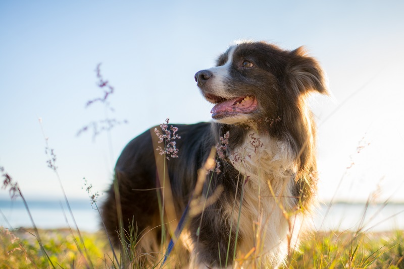 6 reasons why your dog may smell and how you can help