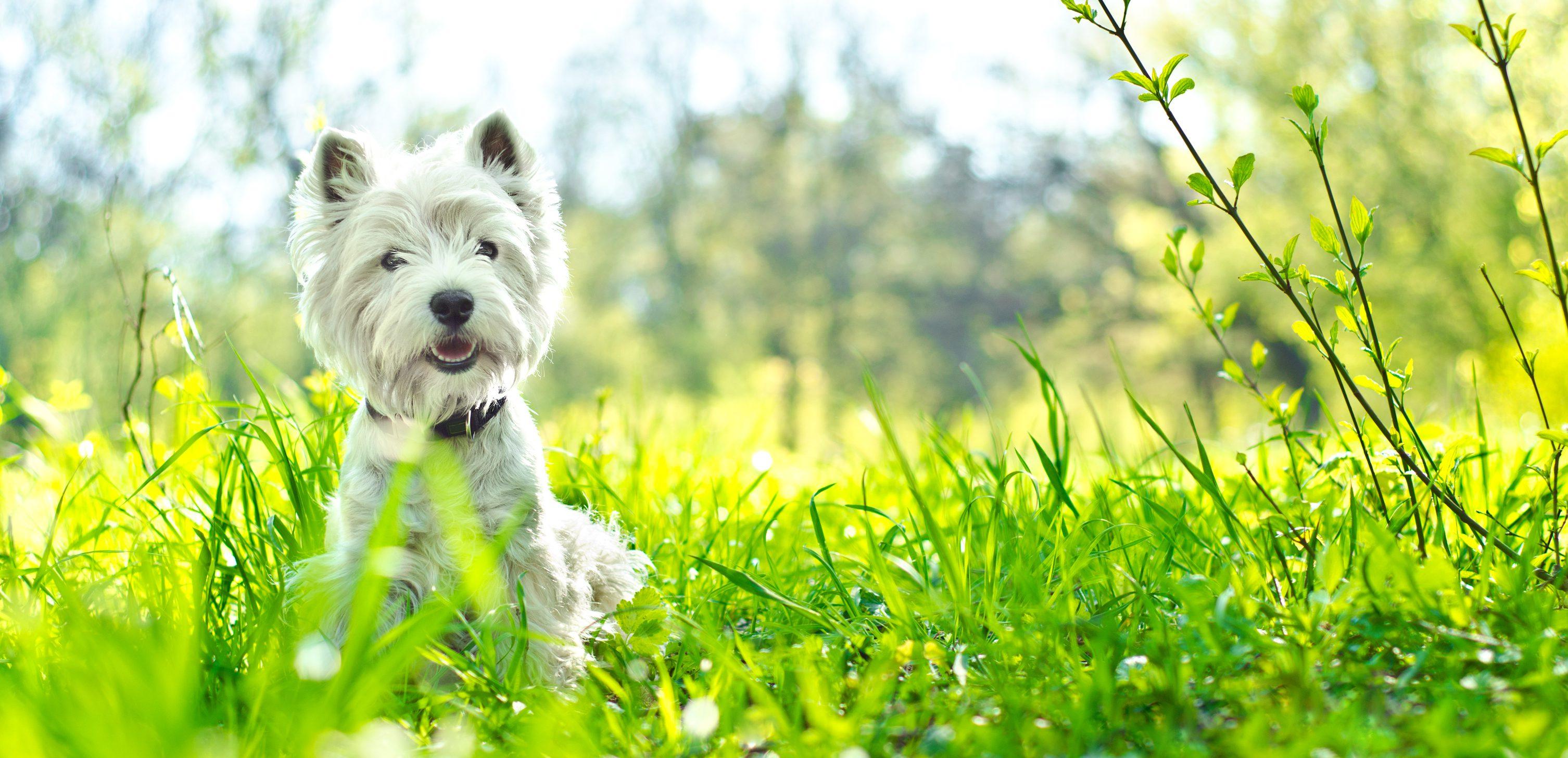 5 ways to help your dog's dry skin - dorwest