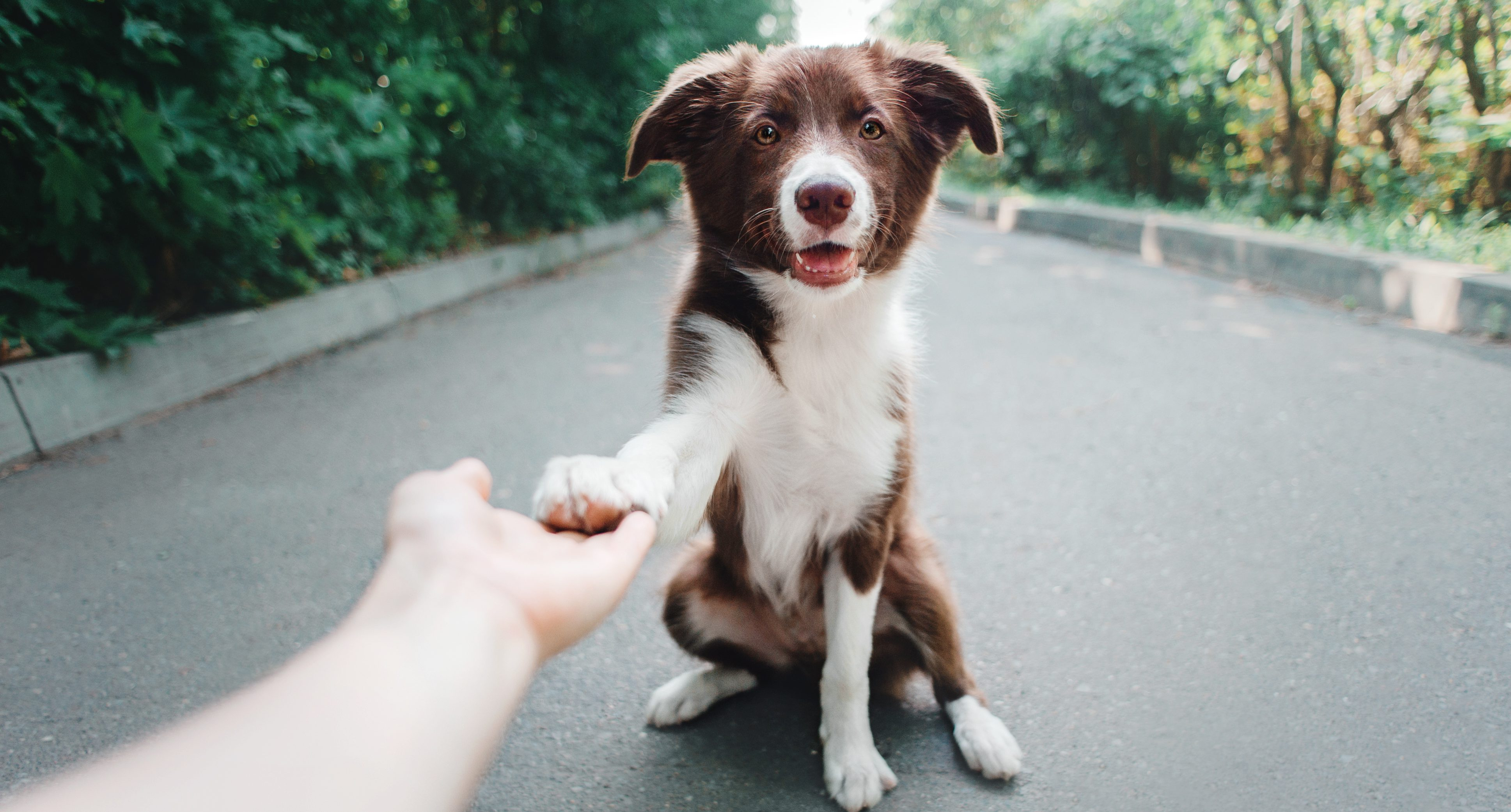7 Easy Tricks to Teach Your Dog | Train Your Dog Month