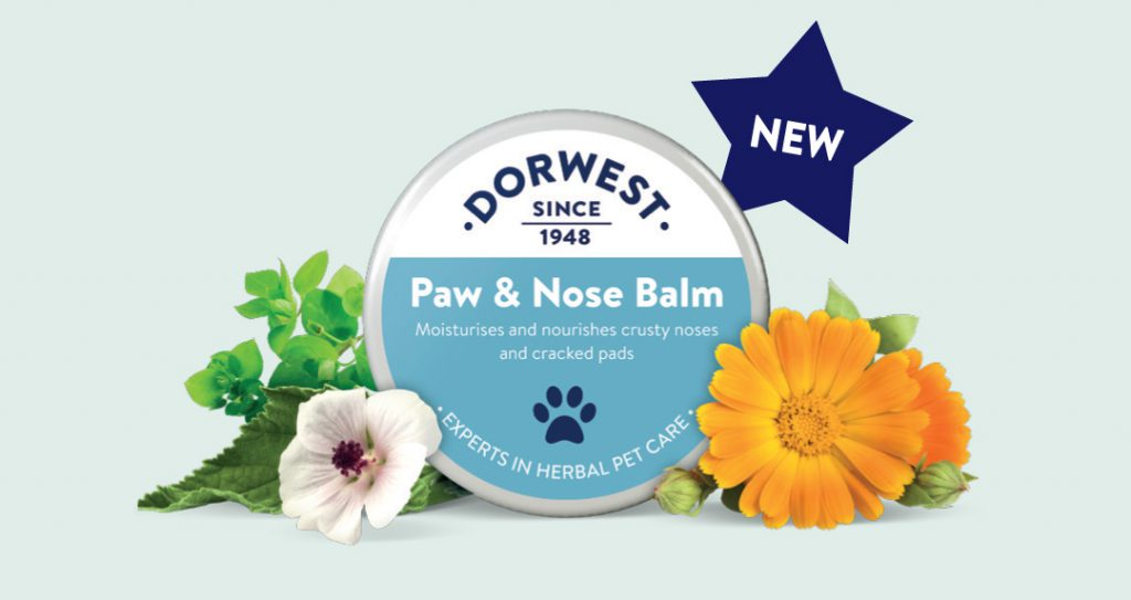 Discover How Dog Balm Can Protect Skin, Paws & Noses Naturally